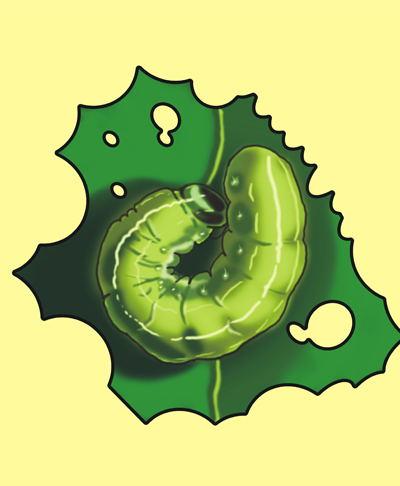 大虫类杀虫剂