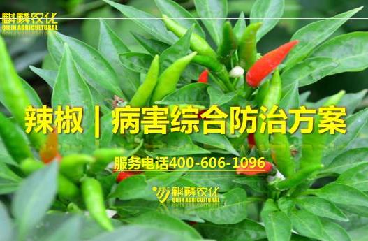 辣椒虫害防治